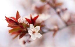 весна kamchatka федерирования русская, котор нужно приветствовать Стоковое Изображение