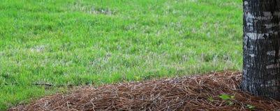 Весна Lawn=background стоковые изображения rf