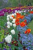 весна london Стоковая Фотография