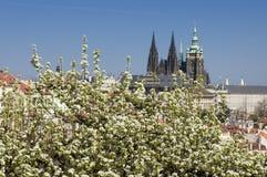 весна prague Стоковое Изображение