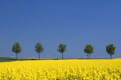 весна s Стоковое Изображение