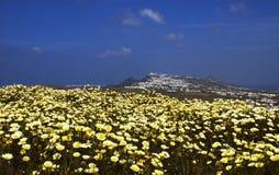 весна santorini Стоковая Фотография
