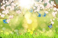 Весна scenary Стоковая Фотография