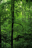 весна smokies листва Стоковые Фотографии RF