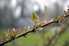 весна sprig Стоковое фото RF