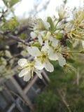 Весна willage стоковые фотографии rf