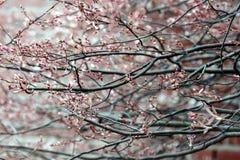 весна xx Стоковая Фотография RF