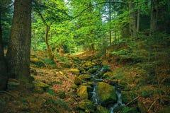 Весной лес Стоковые Фотографии RF