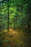 Весной лес Стоковое Изображение