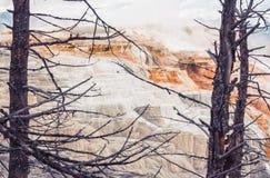 Весны обрамленные деревом канереечные Стоковая Фотография RF