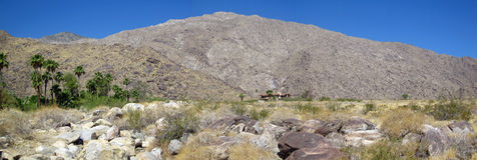 весны панорамы ладони california Стоковое фото RF