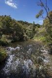 Весны Te Waikoropupu Стоковые Изображения