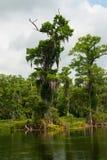 Весны Wakulla, Флорида, США Стоковая Фотография