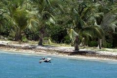 Вест-Инди, французские Вест-Индии, остров Гваделупы, плавая вперед Стоковое фото RF