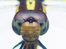 Весьма глаз съемки макроса dragonfly в одичалом Конец вверх по детали dragonfly глаза очень мал Dragonfly на желтом разрешении се Стоковое Фото