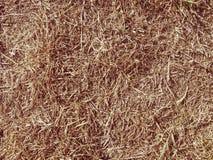 Весьма засохлость Сухая коричневая мертвая трава стоковые изображения
