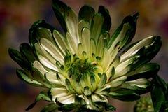 Весьма зеленый цвет Стоковое Изображение