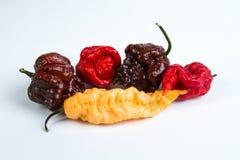 Весьма команда - самые горячие горячие перцы Стоковое Фото