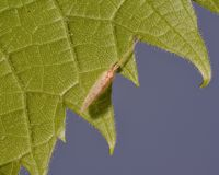 Весьма крупный план вида на зеленых лист - ровной голубой предпосылки насекомого - деталь макроса клеток насекомого и лист стоковые изображения