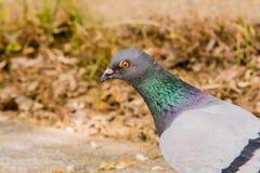 Весьма крупный план голубя с красивыми цветами Стоковое Изображение