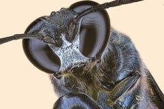 весьма макрос мухы Стоковое Изображение RF