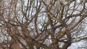 Весьма погода - ветер через ветви дерева сток-видео