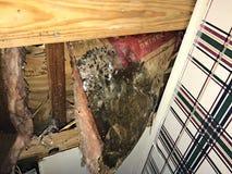 Весьма прессформа на потолке и изоляции обрушилась во время урагана стоковые изображения