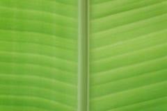 Весьма предпосылка зеленого цвета конца-вверх Стоковые Фото
