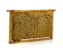 Весь гребень пчелы с трутнем eggs, выводок изолированный на белой предпосылке стоковые фотографии rf