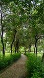 Весь зеленый цвет Стоковое Изображение