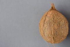 Весь зрелый кокос на серой предпосылке Бортовое положение Шаблон для рогульки плаката Тропический курорт здоровья каникул партия  Стоковые Изображения RF