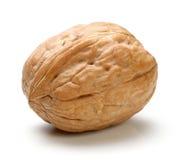 Весь изолированный грецкий орех Стоковое Изображение RF