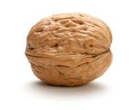 Весь изолированный грецкий орех Стоковое фото RF