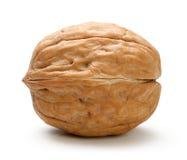 Весь изолированный грецкий орех Стоковые Фотографии RF