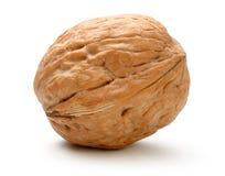 Весь изолированный грецкий орех Стоковые Изображения RF