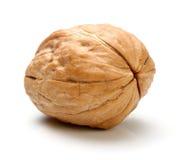 Весь изолированный грецкий орех Стоковое Фото