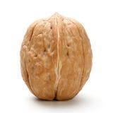 Весь изолированный грецкий орех Стоковая Фотография RF