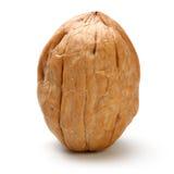 Весь изолированный грецкий орех Стоковое Изображение