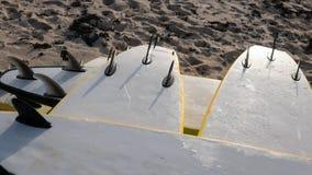 Весь конец-вверх surfboards размеров Заниматься серфингом лагерь и доски различных размеров для серфинга Стоковые Фото
