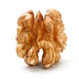 Весь стержень части грецкого ореха Стоковое Изображение RF