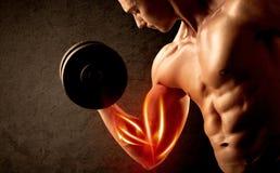 Вес подходящего культуриста поднимаясь с красной концепцией мышцы Стоковые Изображения