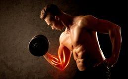 Вес подходящего культуриста поднимаясь с красной концепцией мышцы Стоковые Фото