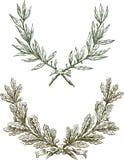 Ветви лавра и дуба Стоковое Изображение