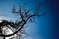 Ветви без листьев на небе Стоковая Фотография