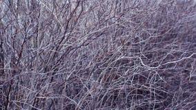 Ветви без листьев Стоковое Изображение