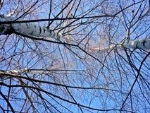 Ветви березы против неба Стоковое Изображение RF