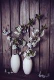 Ветви белых вишневых цветов Стоковое фото RF
