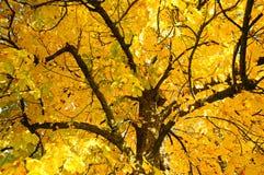 Ветви вала осени Стоковое фото RF