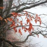 Ветви вала осени Стоковое Фото