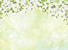 Ветви вектора blossoming яблони иллюстрация вектора